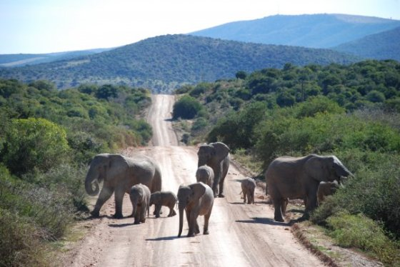 A scene from Shamwari Game Reserve