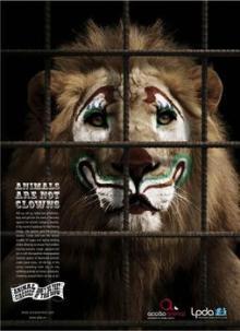 Circus lion pic
