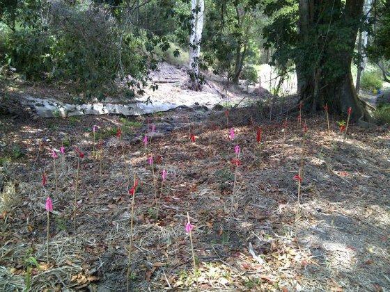 Plant monitoring