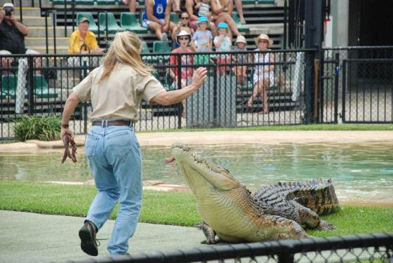 Australia Zoo's famous 'croc show'