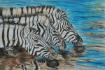 Zebra art by Kate on Conservation