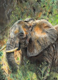 Elephant art by Kate on Conservation
