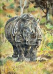 Rhino art by Kate on Conservation