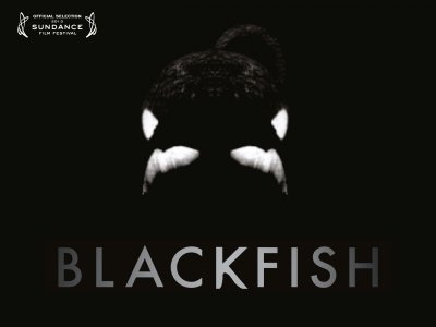 Blakfish_quad_Web_400_300_85