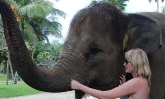 dennis the elephant