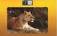 Ma Juah the Lioness