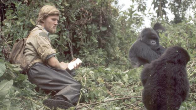 dian fossey devoted thirteen years in the study of gorillas Gorillas in the mist rare book for sale gorillas in the mist is dian fossey's own account of her groundbreaking 13-year study of african mountain gorillas.