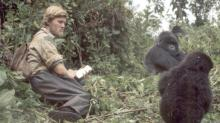 Young Ian Redmond with gorillas