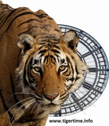 tigertime-twitter