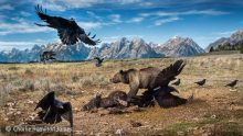Wild West stand-off by Charlie Hamilton James.