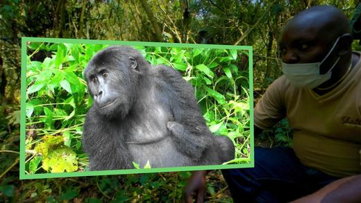 Gorilla Safari VR