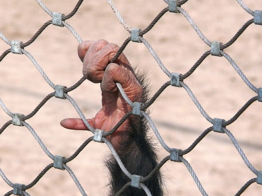 monkey-1863833_960_720